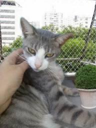 doação lindo gato 8 meses castradinho carinhoso