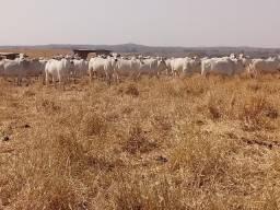 Fazenda para Pecuária com 1.455 hectares a 71 KM de Cuiabá MT