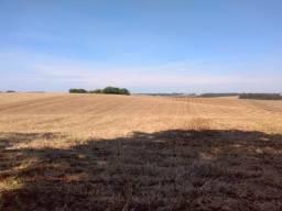 Área terra 31.8 HC 30 de planta