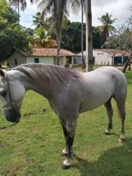 Cavalo Esteira