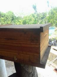 enxame de abelha africana