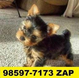 Canil Filhotes Cães Top BH Yorkshire Beagle Basset Poodle Lhasa Maltês Shihtzu Bulldog