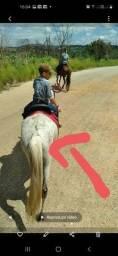 Cavalo roubado