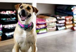 Título do anúncio: Pet Shop
