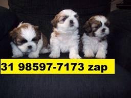 Canil em BH Pet Filhotes Cães Lhasa Poodle Yorkshire Basset Shihtzu Bulldog