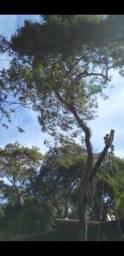 construção de poço de manilha e artesianos, poda de árvores e corte