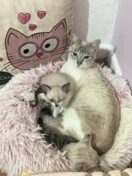 Título do anúncio: Adoção conjunta mamães e 1 ou 2 bebês gatinhos