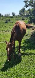 Título do anúncio: Vendo lindo cavalo