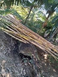 Título do anúncio: Vende-se bambu