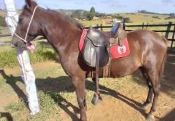 Título do anúncio: Cavalo De Marcha Picada