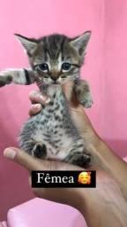 Título do anúncio: Adoção responsável para gatinhas ?