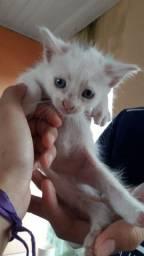 gatinha precisando de um lar