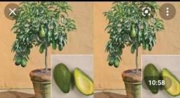 Título do anúncio: Enxesto de plantas somente10 dias em palma..