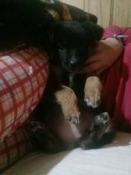 Doa- se cadela tem 3 meses