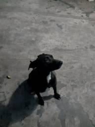Cachorro pra doaçãomédio porte