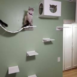 Conjunto nichos para gatos 9 peças eu instalo