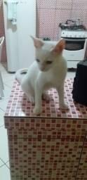 Estou doando esse gatinho..