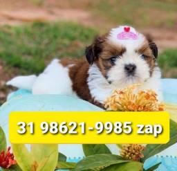 Título do anúncio: Canil Filhotes Cães Premium BH Shihtzu Maltês Lhasa Yorkshire Basset Poodle Beagle