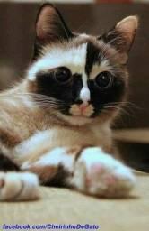 Cat sitter (babá de gatos)