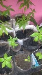 Vendo plantas , suculentas e cactus