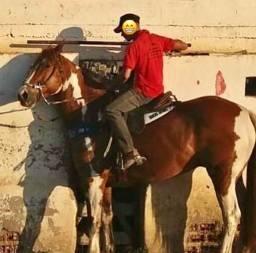 Paint Horse ( pronto )