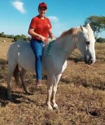 Vendo Cavalo capado