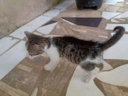 Doação de dois gatos