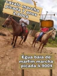 Cavalo e éguas com pordinha