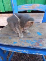 4 gatos para doação