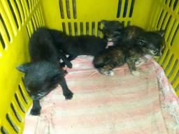 4 gatinhos para doação