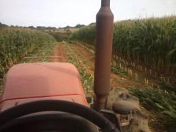 Vendo silagem de milho ensacada