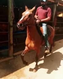 Título do anúncio: Cavalos marcha Batida