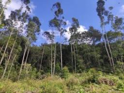 Título do anúncio: Vendo Chácaras de 3 hectares em Taquara
