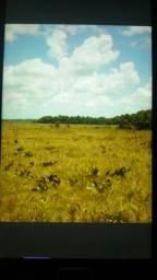 Linda área no Município do Amapá.