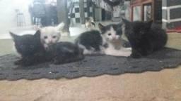 4 gatinhos p/ adoção