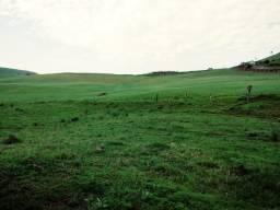 Fazenda - Gado/Agric./Cachaça - 90ha