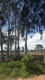Granja com 6 hectares no cobe municipio de vera cruz