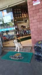 Vendo Pet Shop em Goiânia