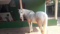 Vende-se cavalo petisco ! Leia a descrição