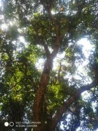 Corte de árvores promoção