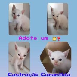 Gatinhos- ADOTE