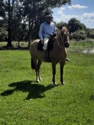 Título do anúncio: Vende-se égua crioula pura registrada e confirmada.