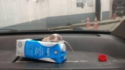 Vendo Camundongos (pets)