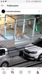 Cachorros achados