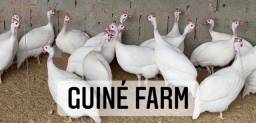 Título do anúncio: Ovos férteis de Angola branca francesa gigante