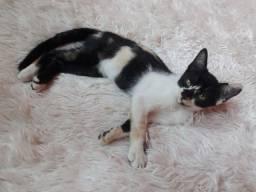 Lindas gatinhas para adoção responsável