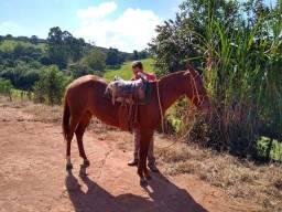 Égua manga larga