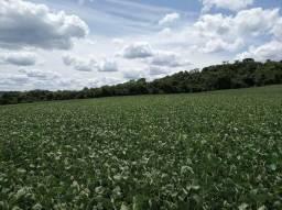 Fazenda na lapa