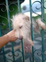 Cãozinho dengoso