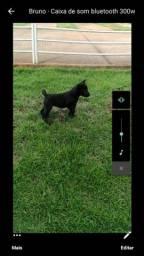Filhote de chowchow com labrador